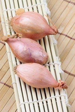 Schalotten (Allium cepa var. aggregatum)