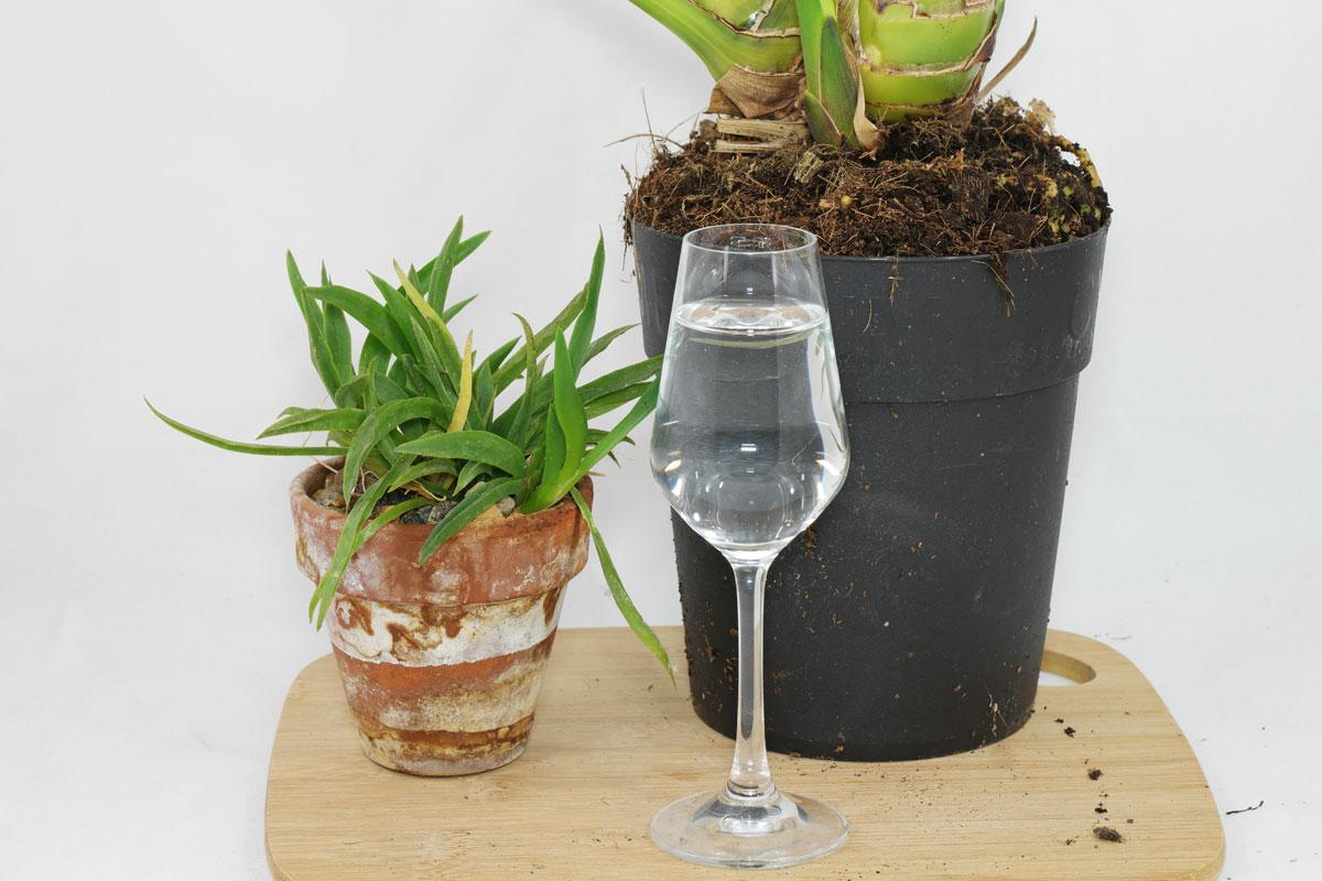 Orchidee-Schnapsglas