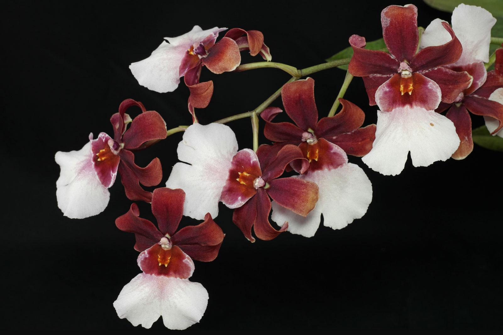 orchideen in blumenerde pflanzen. Black Bedroom Furniture Sets. Home Design Ideas